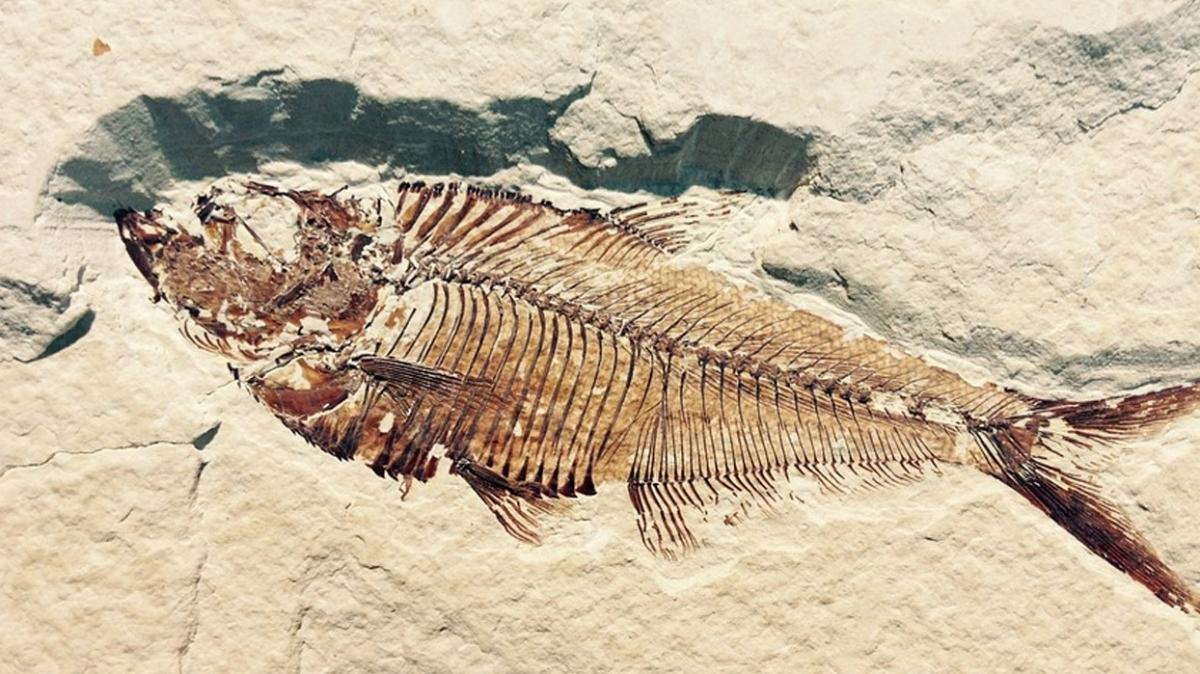 """Fosilleri inceleyen bilim dalına yolculuk! Paleontoloji nedir"""""""