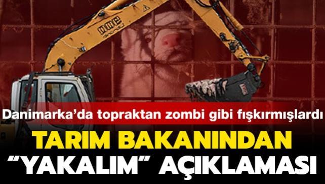 Toplu mezarlardan fışkıran vizonlar tartışma konusu olmuştu: Tarım Bakanı'ndan 'yakalım' açıklaması