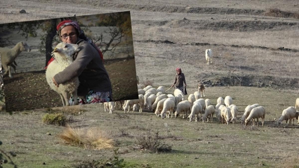 Hibe desteği alarak 37 koyunla başladı, şimdi 150 koyunu var
