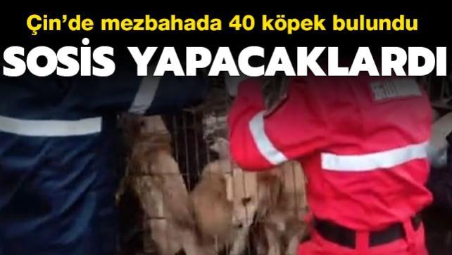 Sosis yapacaklardı... Çin'de mezbahada 40 köpek bulundu