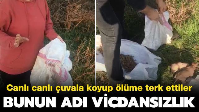 Son dakika haberleri... Hayvanseverleri isyan ettiren görüntü: Onlarca yavru köpeği çuvala koyup ölüme terk ettiler