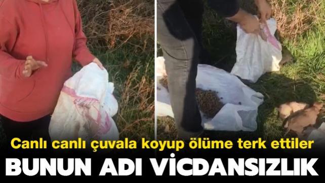 Hayvanseverleri isyan ettiren görüntü: Onlarca yavru köpeği çuvala koyup ölüme terk ettiler