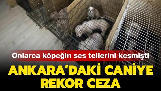 Son dakika haberleri... Ankara'da onlarca köpeğin ses tellerini kesmişti: Rekor para cezası
