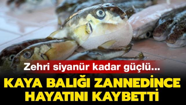 Zehri siyanür kadar güçlü: Kaya balığı zannedince hayatını kaybetti