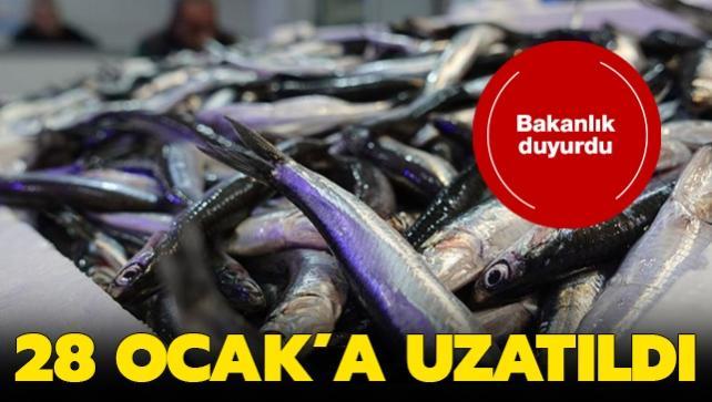 Hamsi avı yasağı, 28 Ocak'a uzatıldı