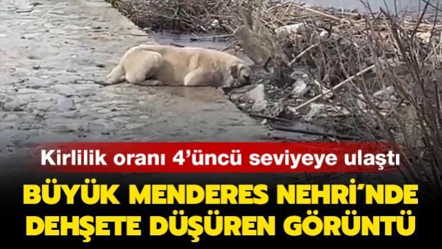 Kirlilik oranı 4'üncü seviyeye ulaştı: Büyük Menderes Nehri'nde dehşete düşüren görüntü