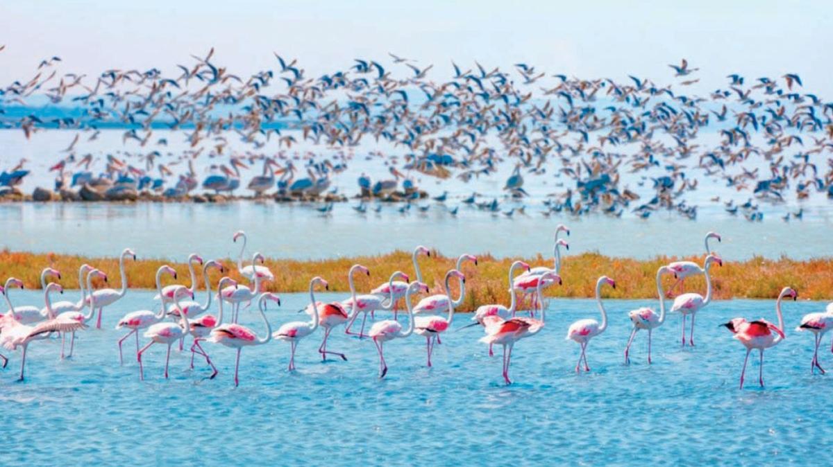 Canlı doğa belgeselini Manyas Gölü'nde izleyin