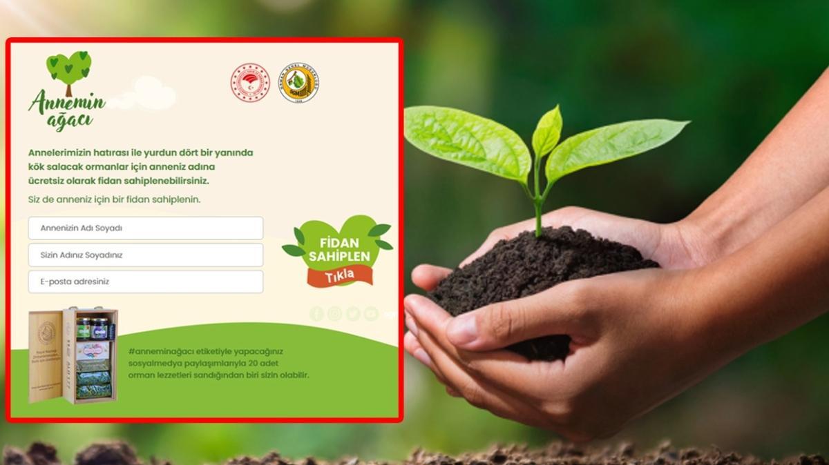 """Annemin Ağacı OGM kampanyası nedir"""" Anneler Günü'ne özel Annemin Ağacı fidan bağışı nasıl ve nereden yapılır"""" İşte bağış ekranı"""