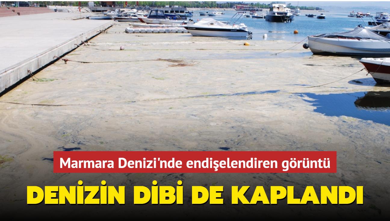 Marmara Denizi'nin dibi de salyayla kaplandı