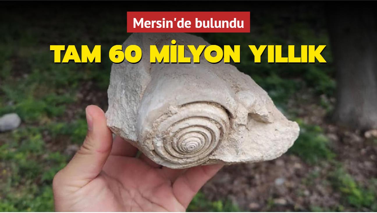 60 milyon yıllık ender görülen salyangoz fosili Mersin'de bulundu