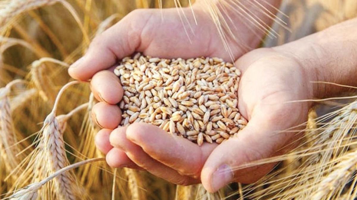 TMO, buğdayı 2.450 liradan satacak