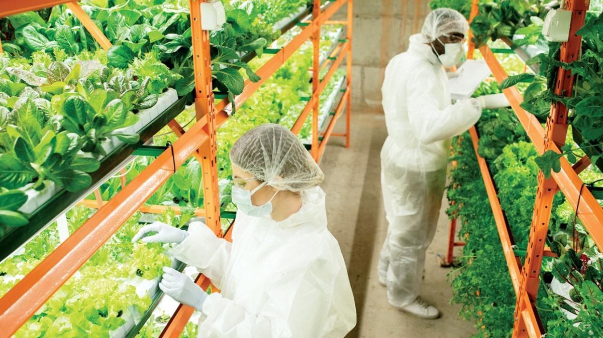 Yatırımlar gün sayıyor! 'Bitki fabrikaları'yla çölde tarım dönemi