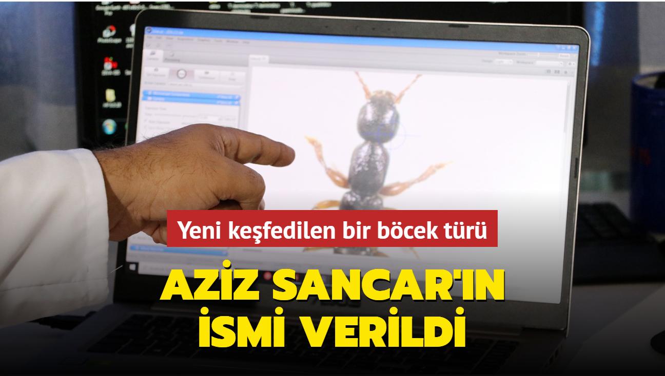 Aziz Sancar'ın ismi yeni keşfedilen bir böcek türüne verildi