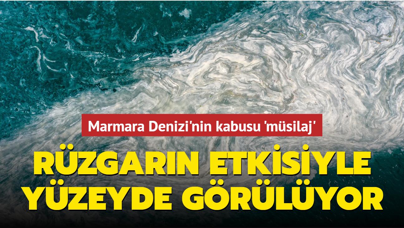Marmara Denizi'nin kabusu müsilaj... Rüzgarın etkisiyle yüzeyde görülüyor