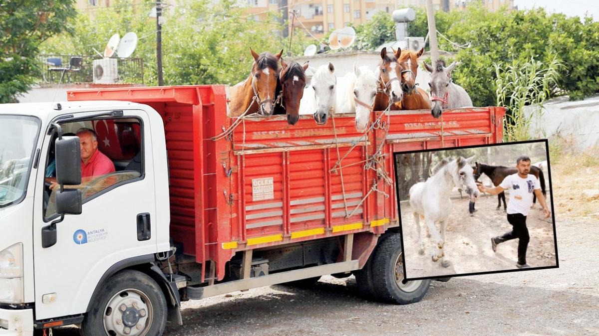 Antalya'nın fayton atları da kayıp!