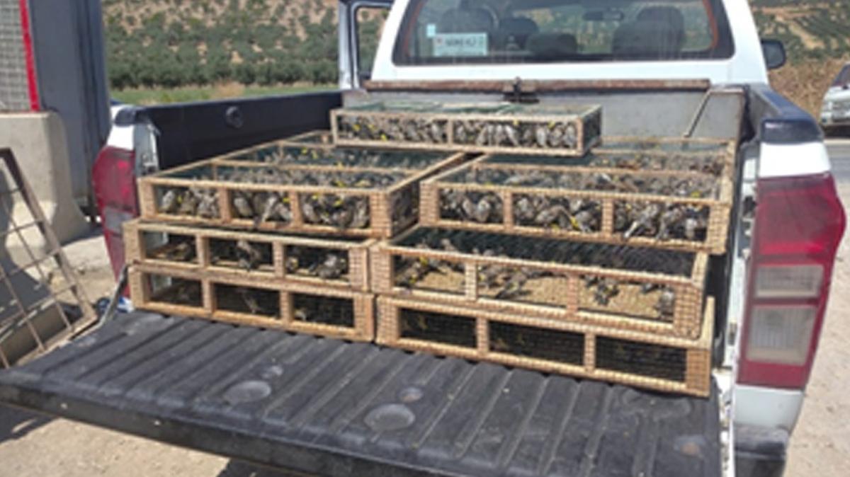 Hatay'da ele geçirildi... 3 bin 754 saka kuşu doğaya bırakıldı