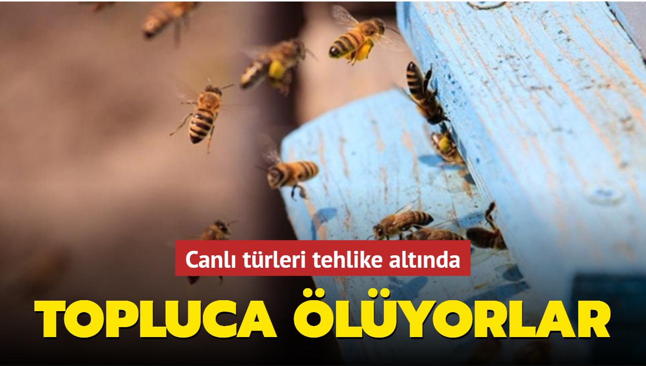 Güney Afrika'da arılar arasında yeni bir hastalık yayılıyor: Topluca ölüyorlar