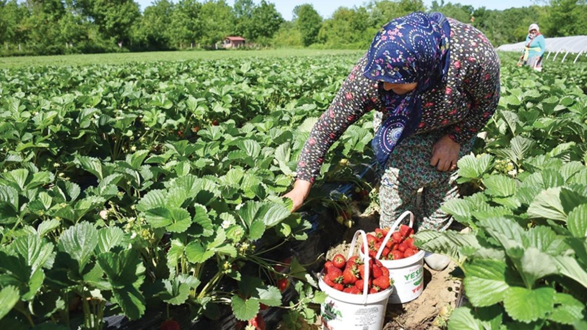 Üretici kırsal kalkınma destekleriyle güçlendi