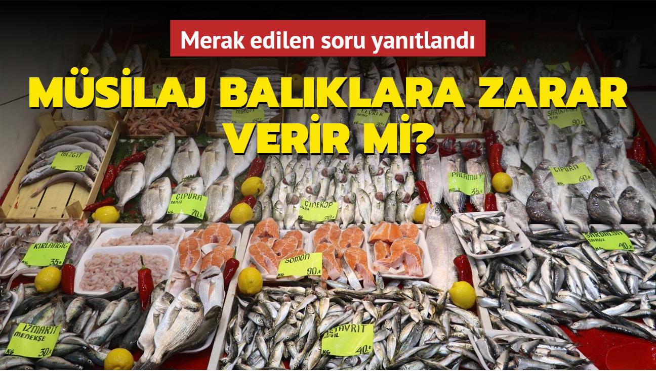 """Marmara Denizindeki müsilaj balıkları zehirler mi"""" Merak edilen soru yanıtlandı"""
