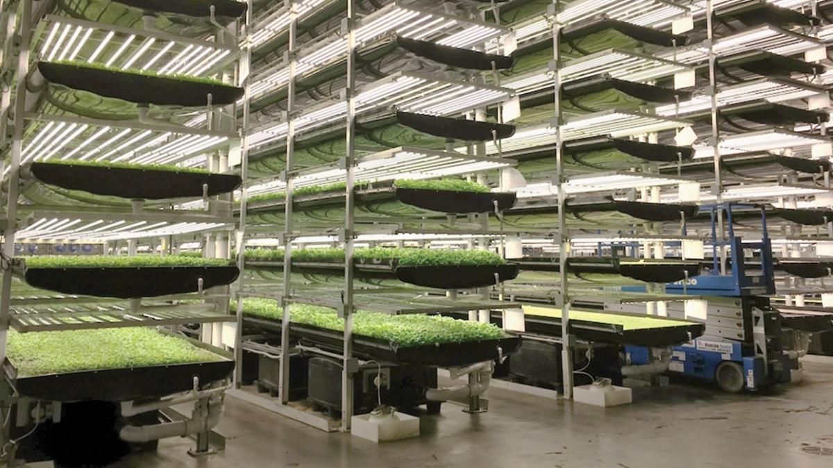 1 milyon metrekarelik dikey tarım fabrikası