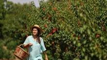 Yöneticiliği bıraktı, dede mirası organik tarıma döndü