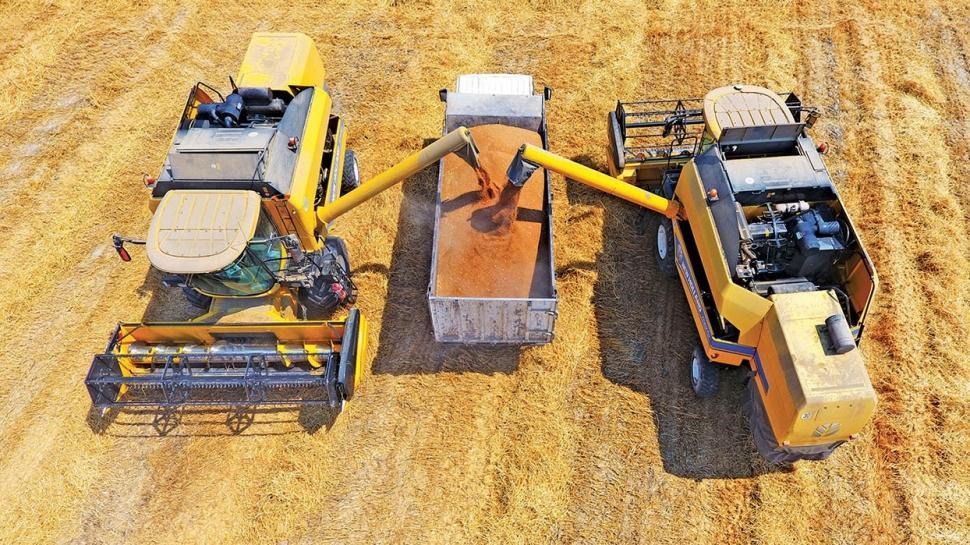 Yerli tohum buğdayla verim yüzde 15 arttı