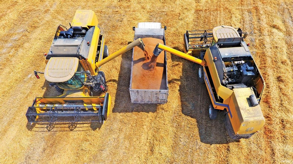 3 çeşitte hasat tamam! Yerli tohum buğdayla verim yüzde 15 arttı
