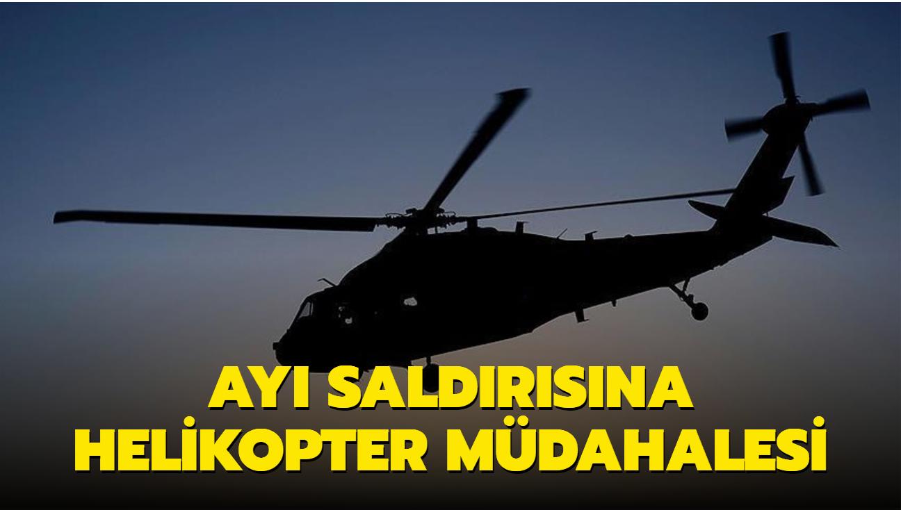 Ayı saldırısına helikopter müdahalesi