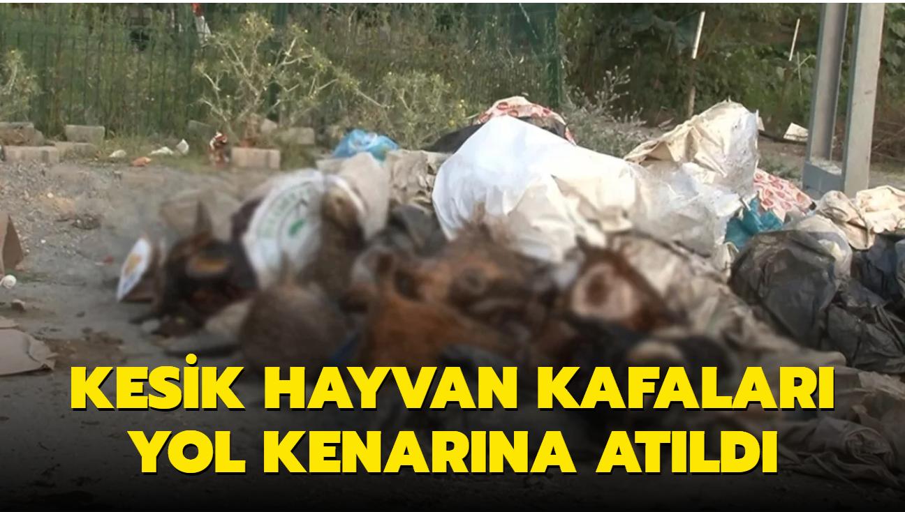 Kurbanlık hayvan kafaları yol kenarına atıldı