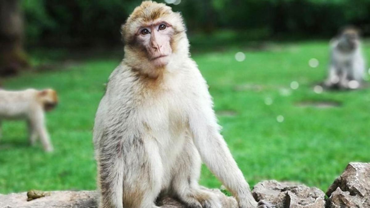 Koronavirüsün ardından bu kez Monkey B ve Monkeypox virüsleri gündemde