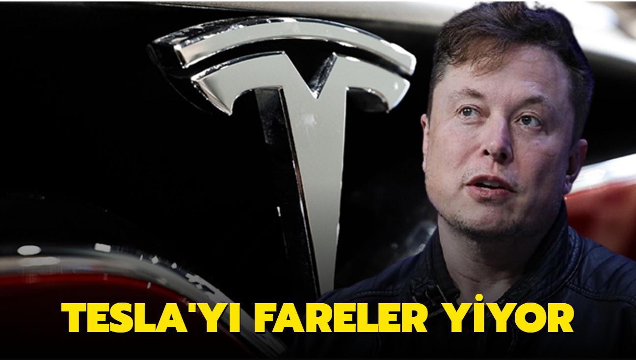 Tesla araçlarını fareler yiyor