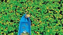 Kelebeklerinden nilüfer bahçesine güzel Konya