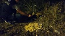 Tuzla Belediyesi zabıtaları tilkilerle yemeklerini paylaştı