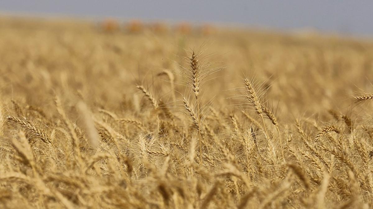 Nijerya kıtlık riskiyle burun buruna geldi