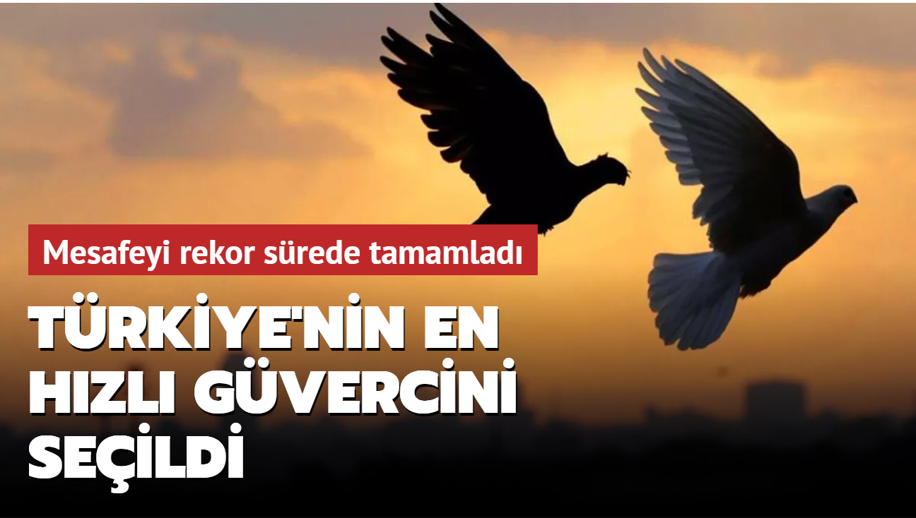 Türkiye'nin en hızlı güvercini seçildi... 477 kilometrelik mesafeyi 6 saat 33 dakikada katetti