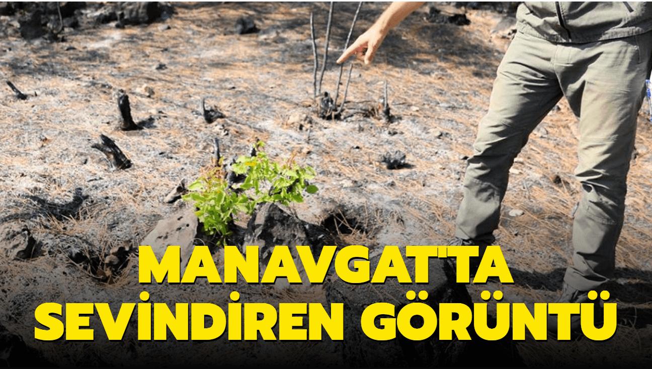 Manavgat'ta sevindiren görüntü: Küle dönen alanda 7 bitki filizlendi