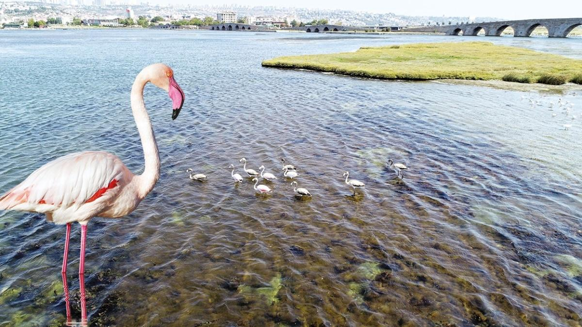 İstanbullu flamingolar