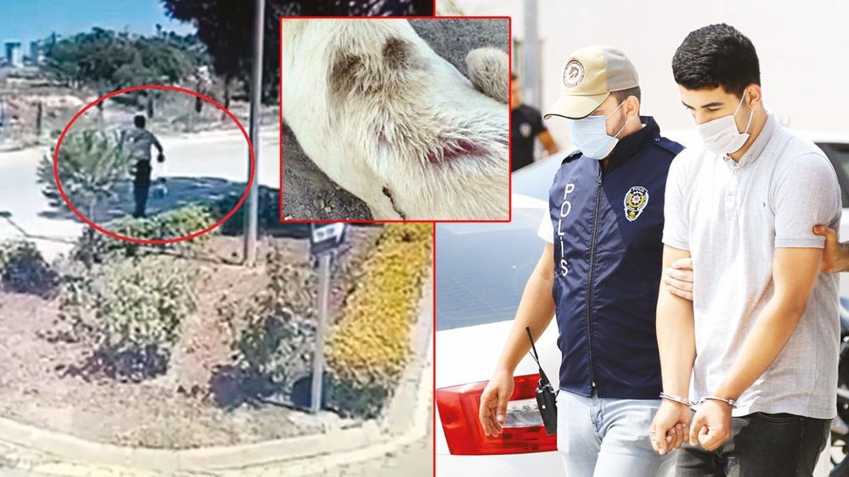 Köpeğe kaynar sulu işkence... Vicdansız!