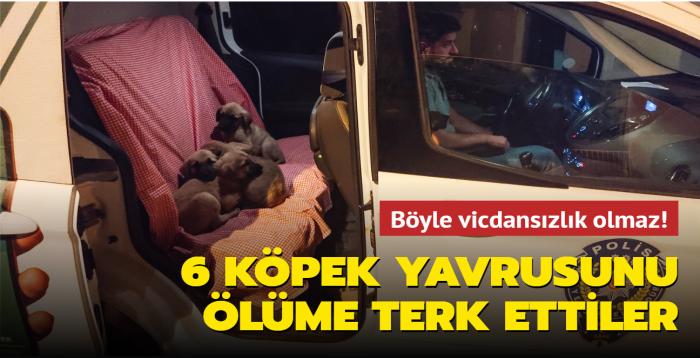 Böyle vicdansızlık olmaz! 6 köpek yavrusunu ölüme terk ettiler