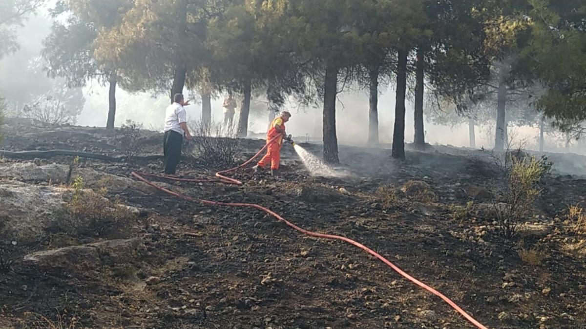 Adana'daki orman yangını kontrol altına alındı