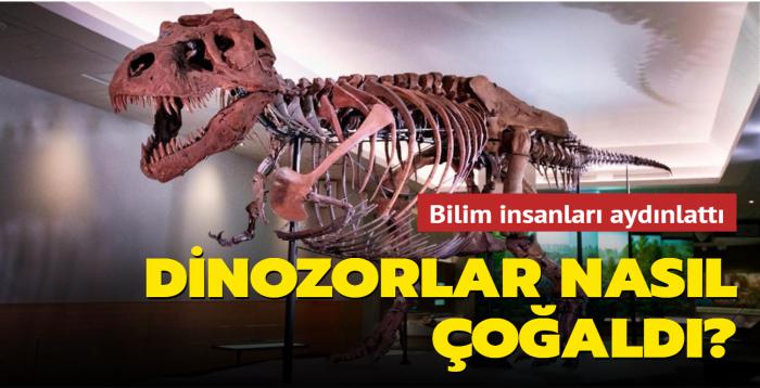Kuşların bugünkü davranışları, dinozorların üreme yöntemlerine ışık tuttu