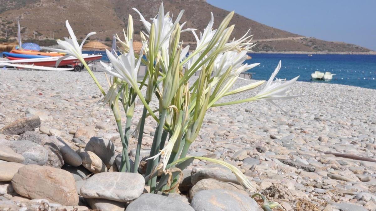 11 aylık bekleyişin ardından yeniden çiçek açtılar... Koparmanın cezası 80 bin liradan fazla