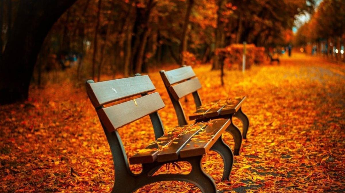 """Sonbahar mevsimi başladı mı, neden doodle oldu"""" Sonbahar mevsiminin özellikleri neler, hangi aylarda olur"""""""