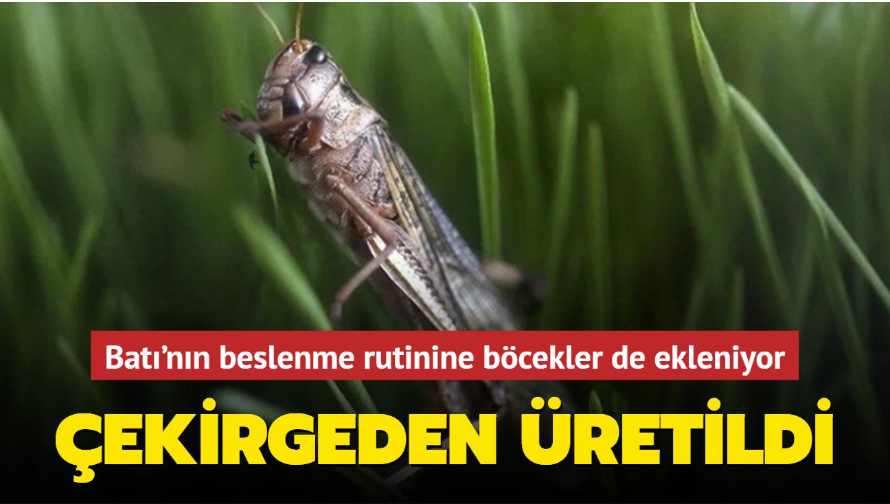 Batı'nın beslenme rutinine böcekler de ekleniyor: Çekirgeden şekerleme üretildi