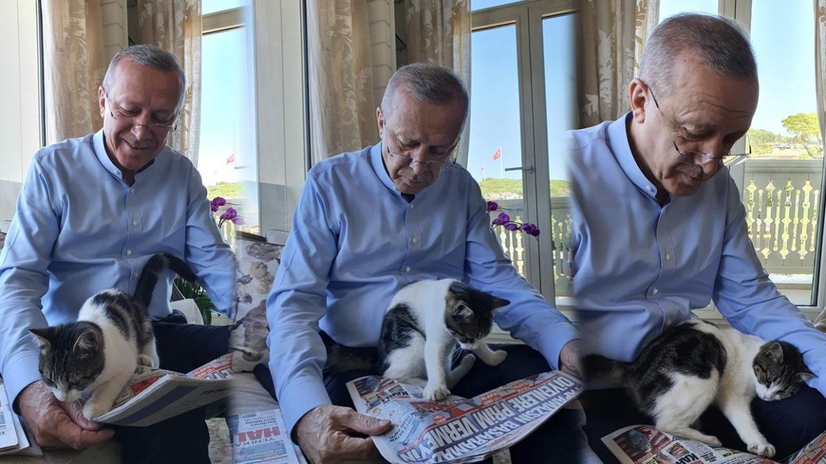 Başkan Erdoğan'dan sevimli paylaşım... Torununun kedisiyle aynı karede