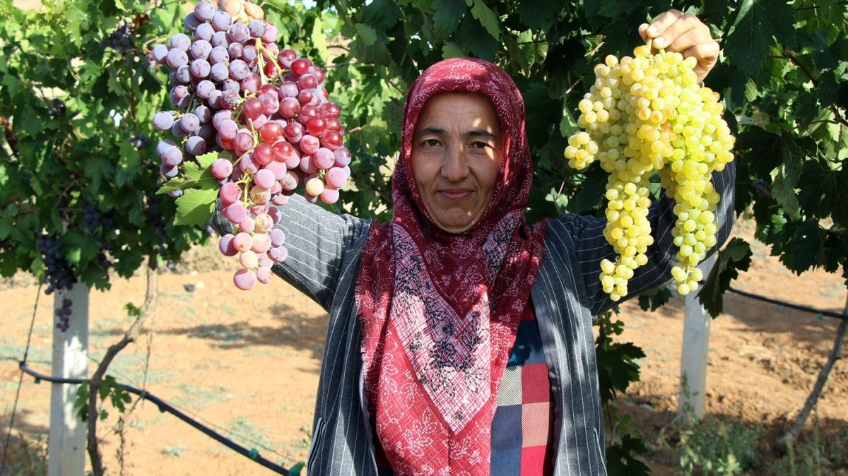 30 bin TL hibeyle üzüm bahçesi kurdu