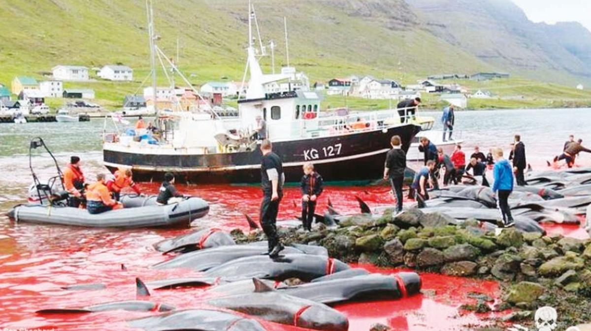AK Parti Sözcüsü Ömer Çelik'ten 'balina' tweeti: Canlılara yüksek standartlı katliam