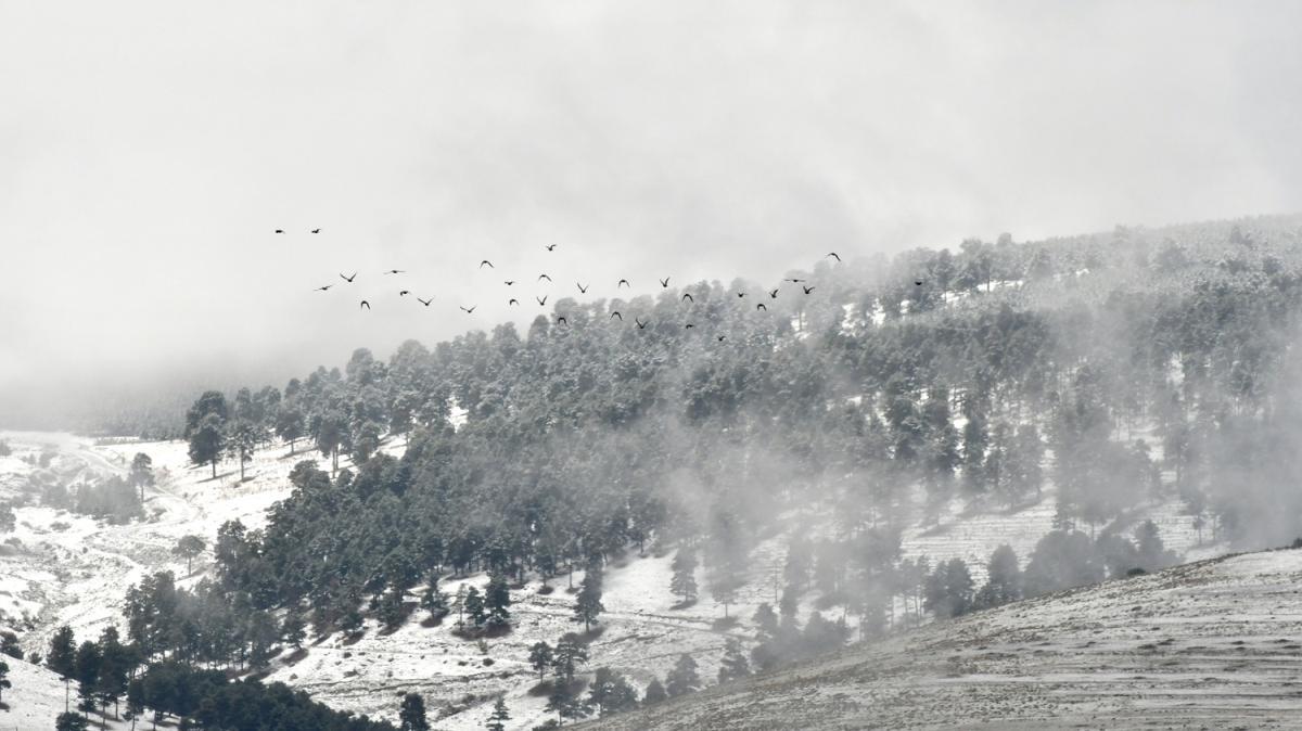 Kars'ın Sarıkamış ilçesi beyaza büründü