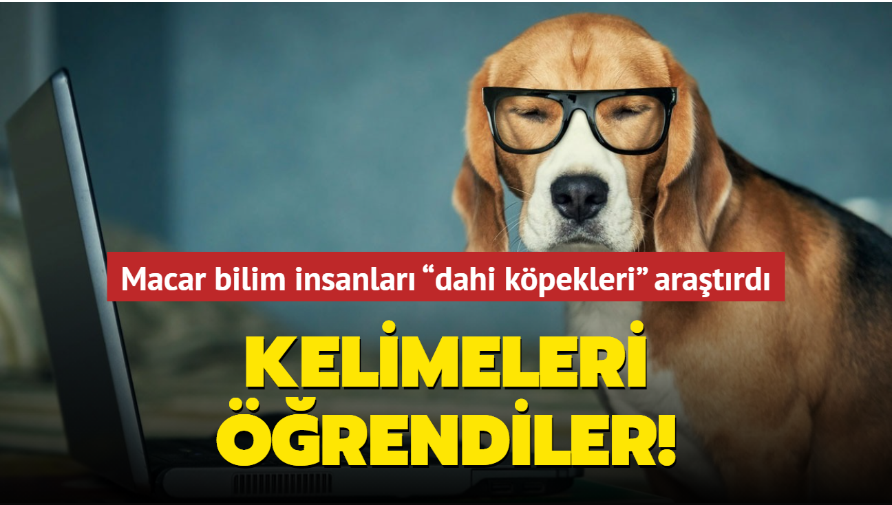 Macar bilim insanları ortaya koydu: Köpekler kelimeleri öğrendi
