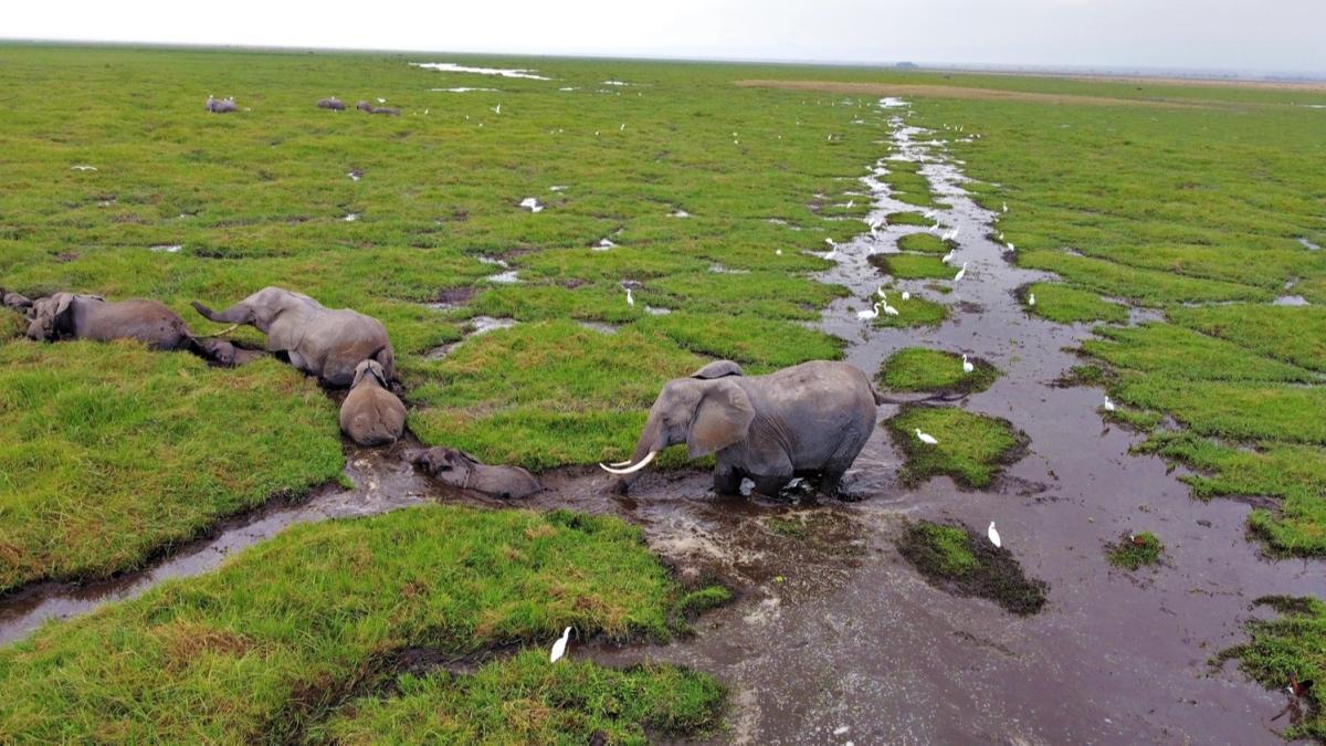 """Kenya'da """"bebek fil"""" patlaması"""